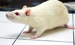 Rat poison found a second life as a therapy for blood clots, embolism and stroke.