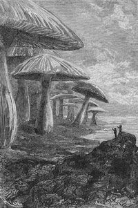 """Not all science fiction visions pan out. In his book, """"Voyage to the Center of the Earth,"""" author Jules Verne conceived of the Earth's core as a """"forest of mushrooms."""""""