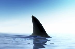 A world without sharks affects the entire seafood chain, even algae.