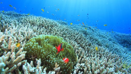 What if all the coral reefs disappeared?