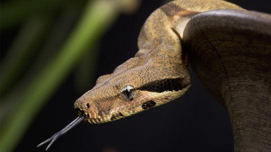 What if there were no snakes?
