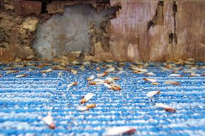 For such tiny little critters, termites can leave a path of destruction costing thousands of dollars.