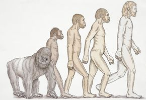 Track the progress of the jaw in this illustration of human evolution.