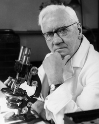 Sir Alexander Fleming in his lab in 1954.