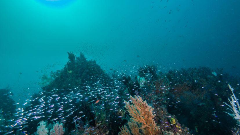 artifical coral reef in ocean