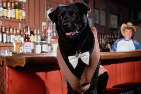 Bosco was voted mayor of  Sunol, California when he received more votes than the two human candidates. Bartender Kathleen Anderson stands behind him.