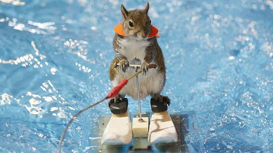 10 Animals With Better Jobs Than You