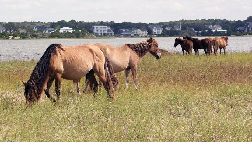 north carolina horses