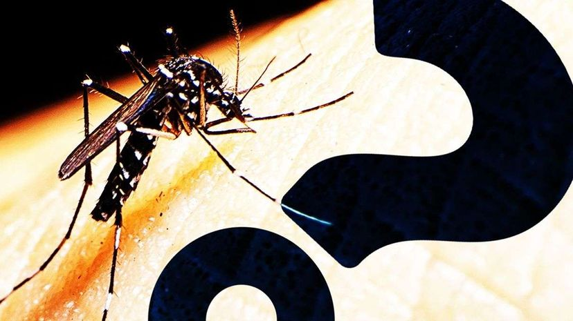 Welcome to the Mosquito Factory HowStuffWorks