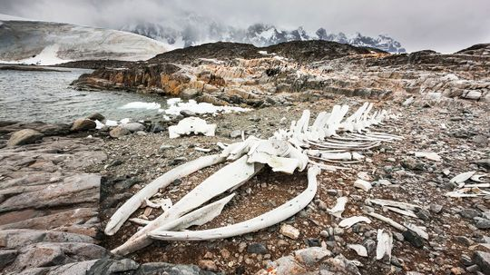 Skeletons and Mummies Litter the Shores of Antarctica