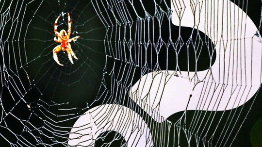 Spiders May Go Extinct From Oversharing