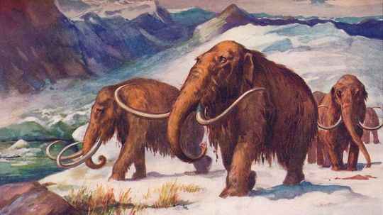 World's Last Woolly Mammoths Were Killed by Thirst, Not Humans