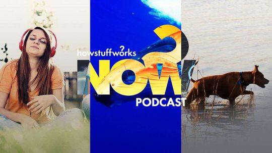 Hear and Now: Dogs Are Guinea Worm's Best Friend?