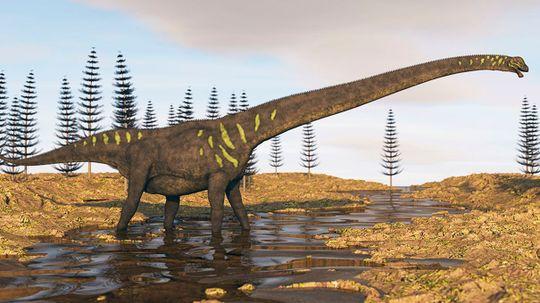 World's Largest Dinosaur Footprints Discovered in Australia