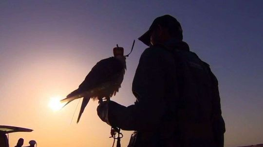 Using Drones to Train Hunting Falcons in Dubai