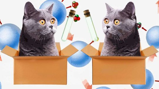 Scientists Prove Schrodinger's Cat Can Be in Two Places at Once