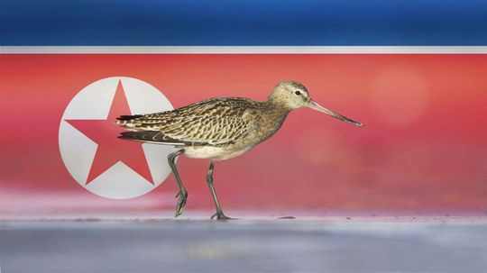 How North Korea Being Bad for People Is Good for Birds