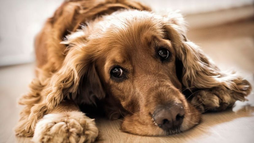 There are now two new flu vaccines on the market for your four-legged friends. LisaAlison/iStock/ThinkStock