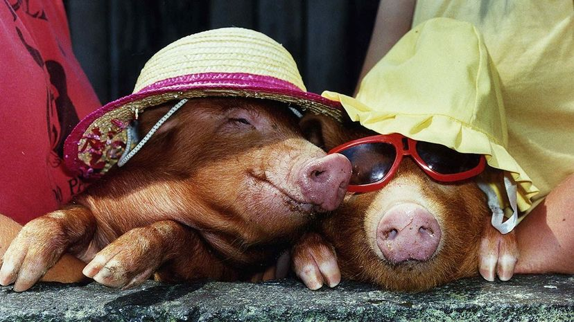 The UV rays in sunlight can damage human skin; is the same true for that of animals? Mirrorpix/Getty Images