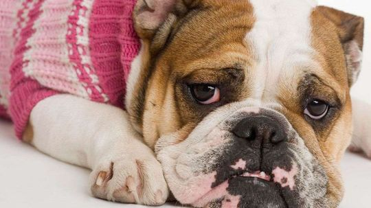 Your Dog or Cat Can Have Depression, Too