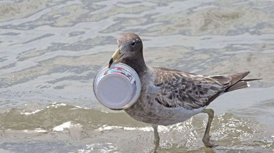 There's a Stinky Reason Seabirds Eat Plastic