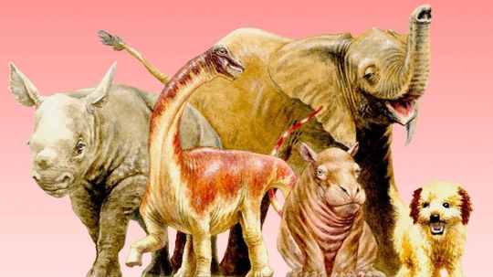 Baby Titanosaurs Hatched With Adult Proportions, Still Pretty Darn Cute