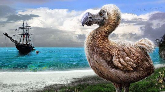Dodo Birds: Maybe Not Complete Dummies After All