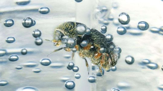 Hand Sanitizer Is Great at Preserving Insect DNA