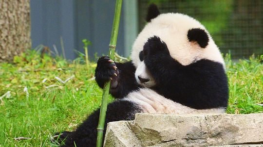 More Than a Hashtag: Can Social Media Help Save Endangered Species?