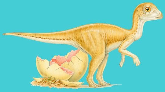 Dinosaur Eggs Took Months to Hatch, Perhaps Contributing to Dino Doom