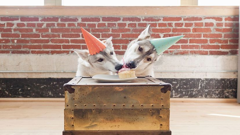 A study out of Vienna found that dogs are very willing to share treats with their dog friends. Cultura RM Exclusive/Grace Chon/Getty
