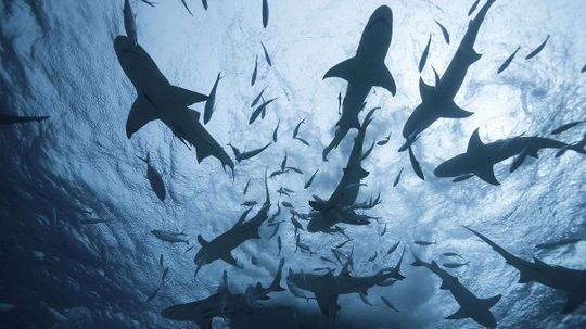 We Know Far Less About Sharks Than You Might Think
