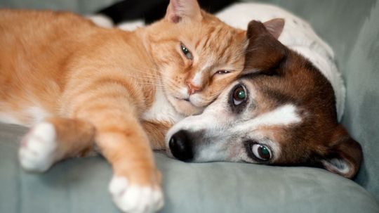 Is It Legal to Give Your Pet Medical Marijuana?
