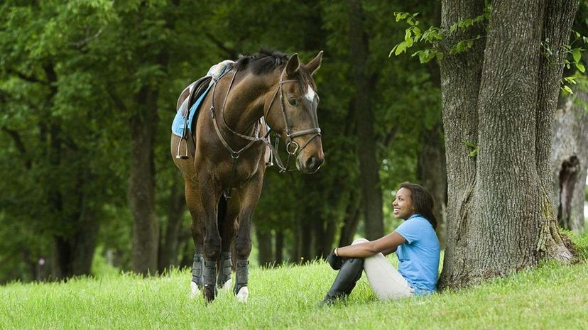 A new study shows that horses can indicate desires and preferences and communicate them to humans. Zave Smith/Getty Images