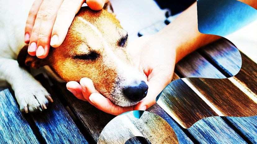 What Do Dogs Prefer: Food or Praise? HowStuffWorks NOW