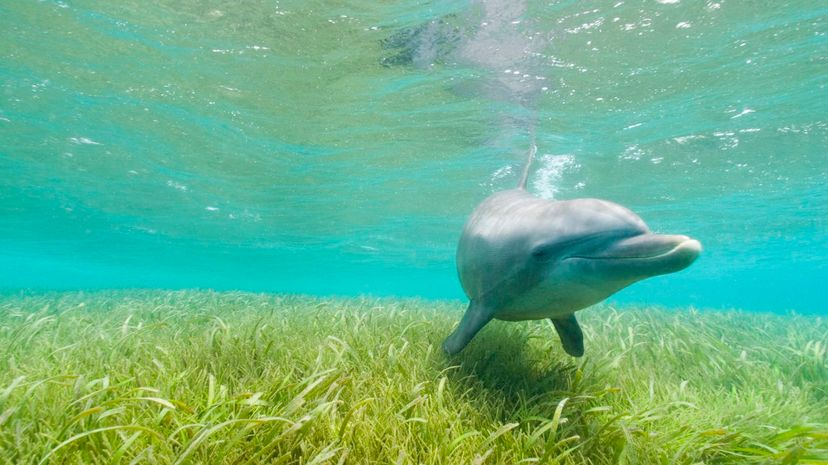 Tiny animals that live in seagrass help to pollinate ocean plants, a new study found. Stuart Westmorland/Getty Images