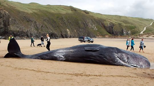 Solar Flares Could Scramble Signals, Cause Mysterious Whale Beachings