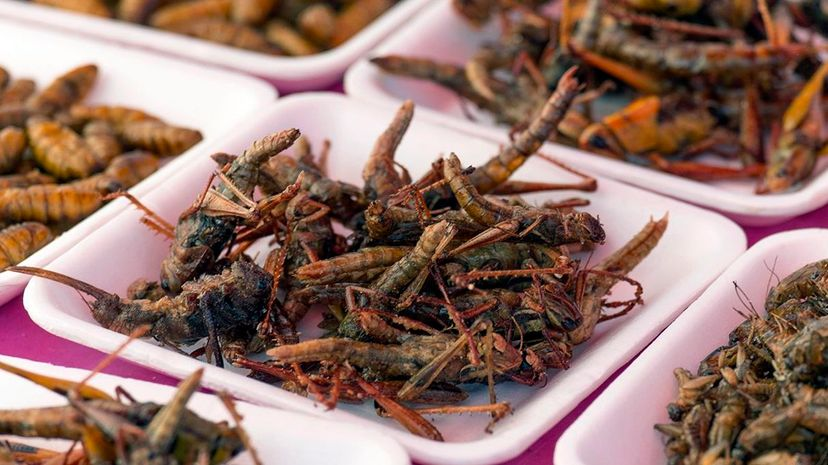 People have been eating insects for thousands of years. Now they can drink them, too. DAVID BUFFINGTON/GETTY