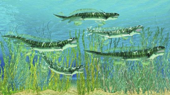 Cannibalistic Ancient Shark Ancestors Devoured Their Own Young