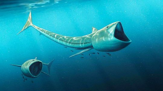 Fossils of Ancient Filter-feeding Fish Discovered in Colorado
