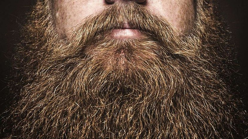 Sorry, dude. Model Chris John Millington called that big, bushy beard dead back in April 2015. RyanJLane/Getty Images