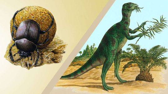 Nutritious Dino Poop Greased the Wheels for Dung Beetle Evolution