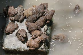 Thousands of frogs landing on a town would scare anyone.