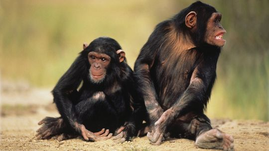 What is the last common ancestor?