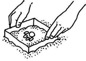 Make a mold from an animal track.