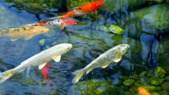 Bubbling Fish Garden Fountain-Pool