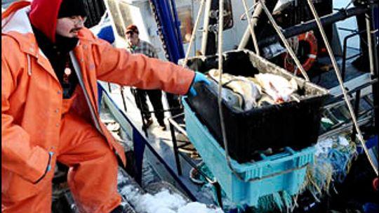 Overfishing  Endangered Species