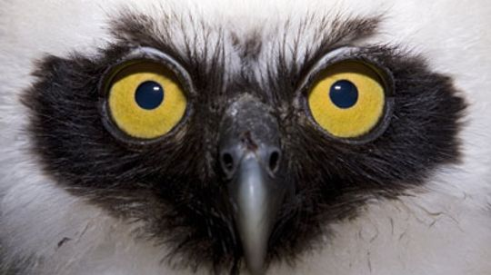 How can owls fly silently?