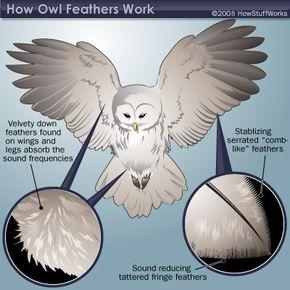 Illustration of owl feathers