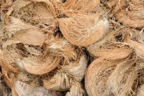In the late 18th century, treasure hunters found coconut fiber in the Money Pit – even though the nearest coconut tree was thousands of miles away. Could it be a clue?